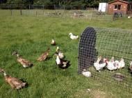 Our free range birds
